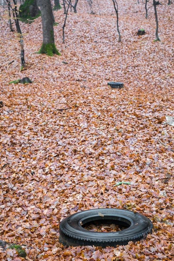 Старая покрышка автомобиля брошенная вне в лес осени, загрязнение окружающей среды стоковая фотография