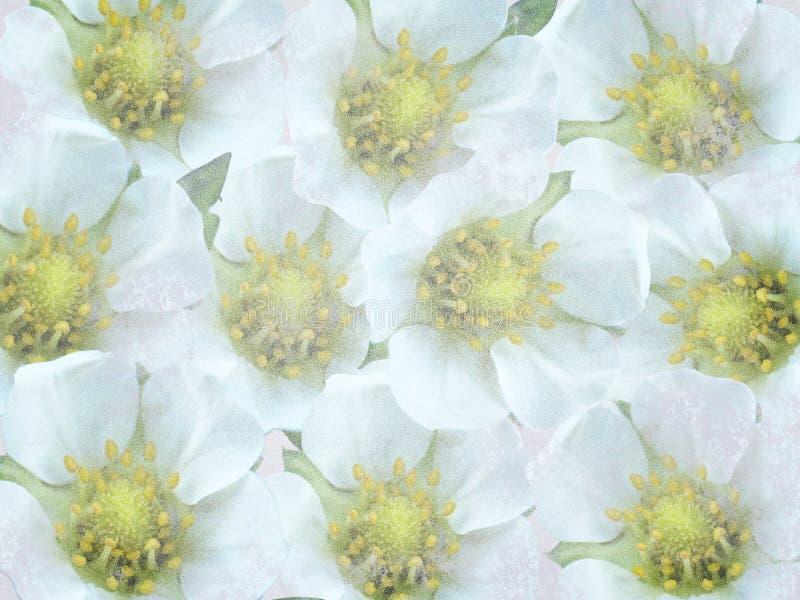 Старая предпосылка с белыми цветками стоковые фотографии rf