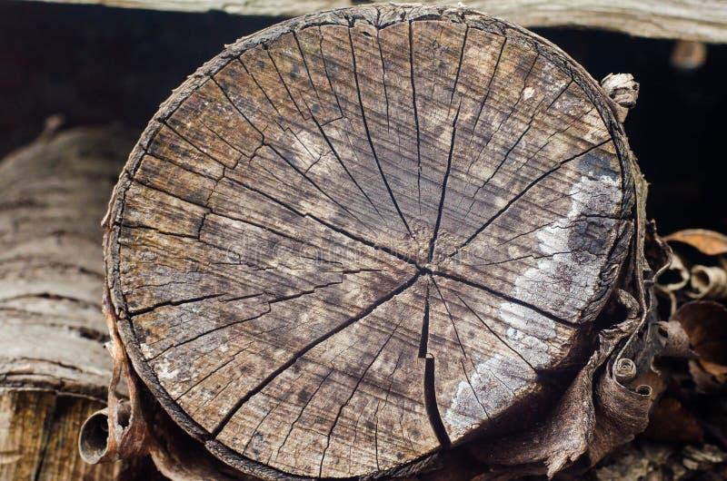 Старая предпосылка пня дерева, выдержанная деревянная текстура с поперечным сечением журнала отрезка стоковая фотография rf