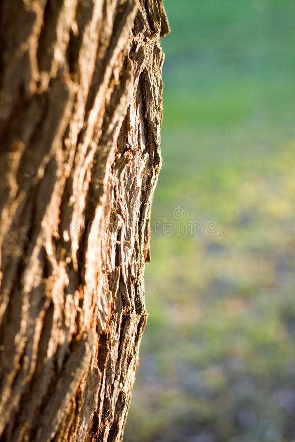 Старая предпосылка ствола дерева Природа стоковые фотографии rf