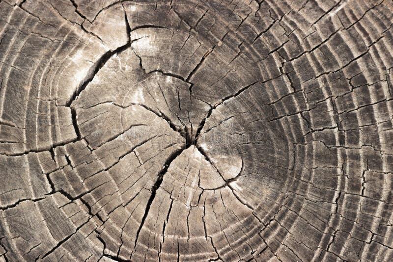 Старая серая предпосылка текстуры пня дерева деревянная стоковое фото