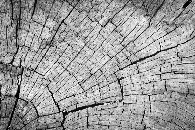 Старая серая треснутая деревянная предпосылка текстуры стоковая фотография