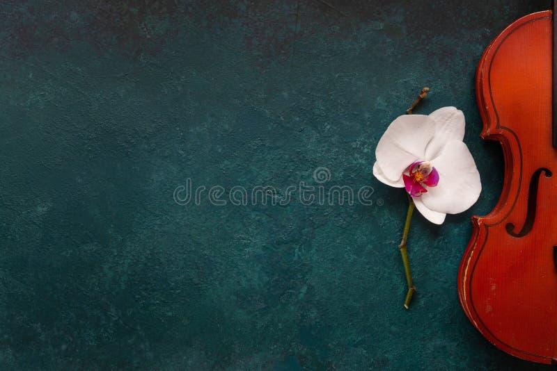 Старая скрипка и белый цветок орхидеи Взгляд сверху, конец-вверх на зеленой конкретной предпосылке стоковое фото rf