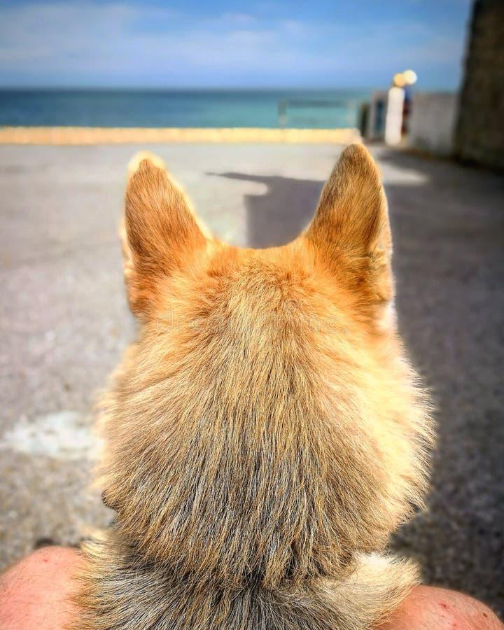 Старая собака моря стоковая фотография rf