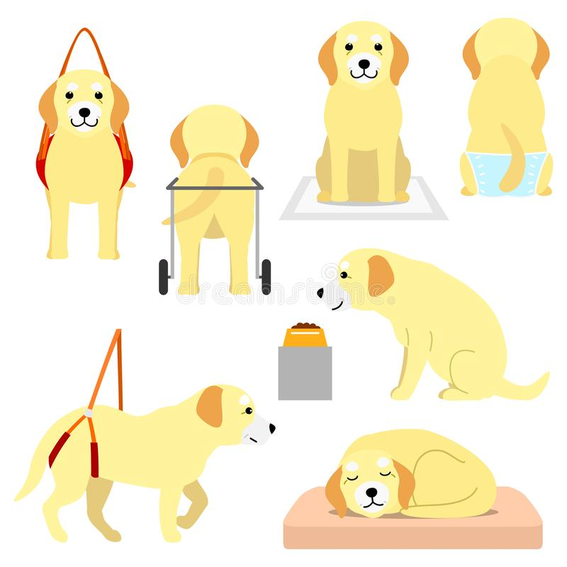 Старая собака с пожилыми продуктами заботы иллюстрация штока