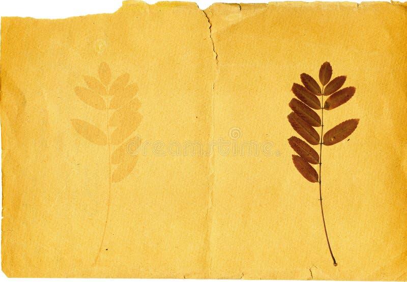старая сорванная бумага иллюстрация штока
