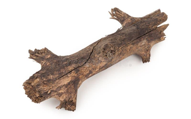 Старая сухая ветвь стоковое изображение