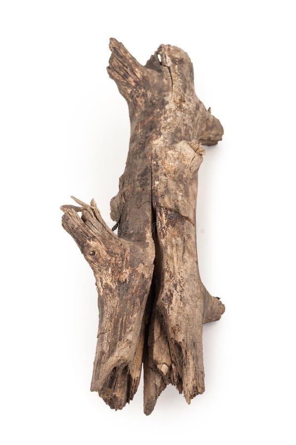 Старая сухая ветвь стоковые фото