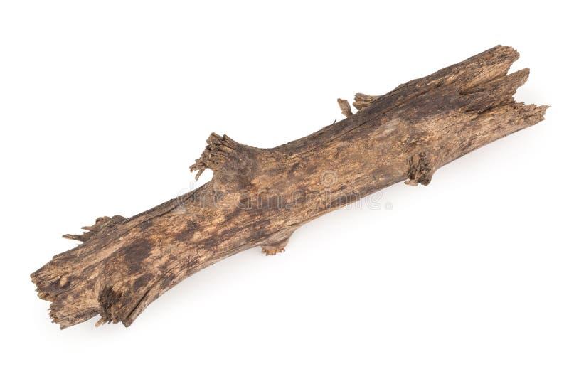 Старая сухая ветвь стоковая фотография rf