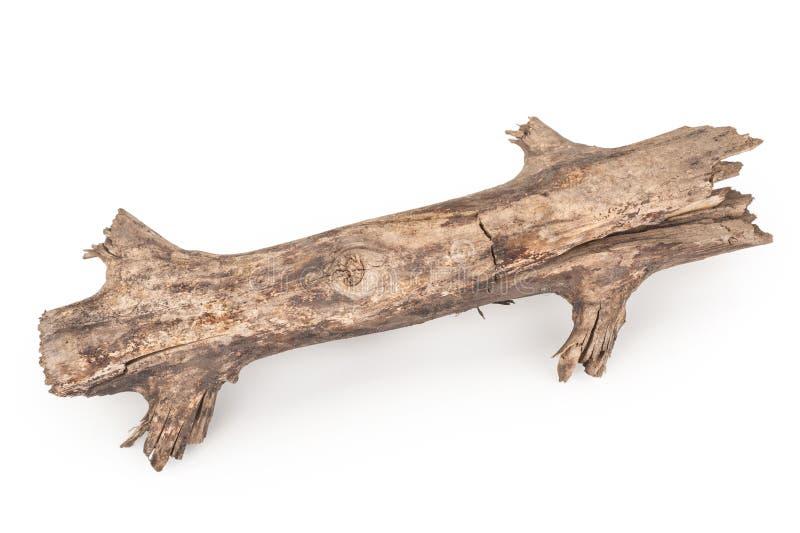 Старая сухая ветвь стоковое изображение rf
