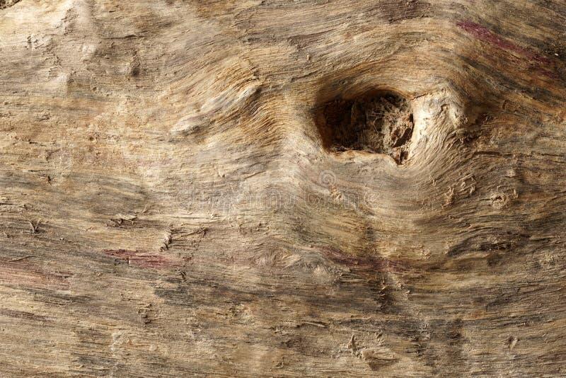 Старая сухая выдержанная древесина смещения и grunge стоковые изображения rf
