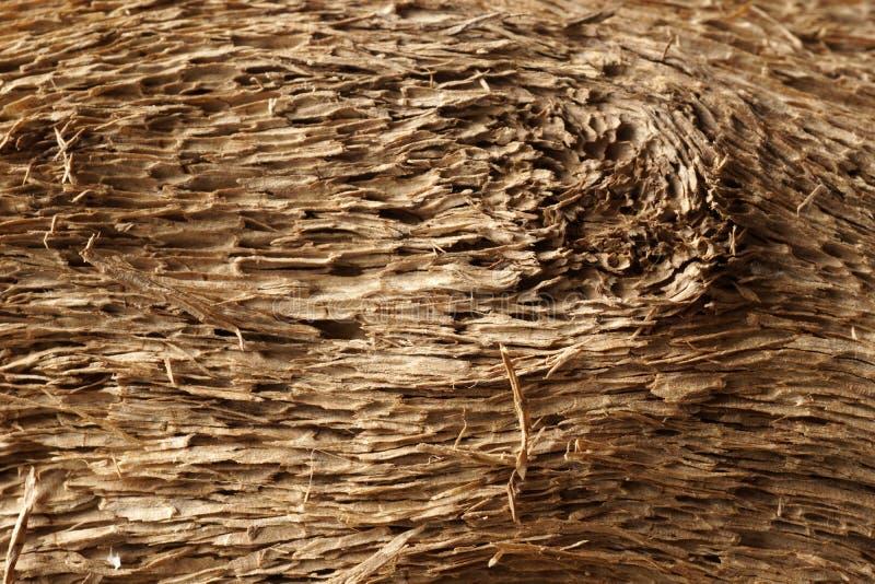 Старая сухая выдержанная древесина смещения и grunge стоковые фото