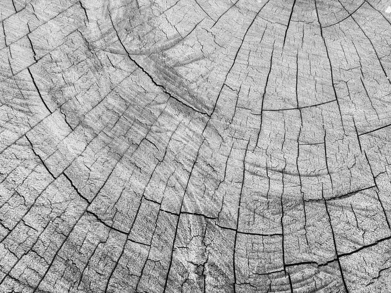 Старая текстура пня, старый журнал, треснутая деревянная текстура в черно-белом стоковая фотография
