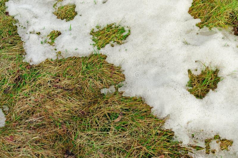 Старая трава под снегом стоковое фото