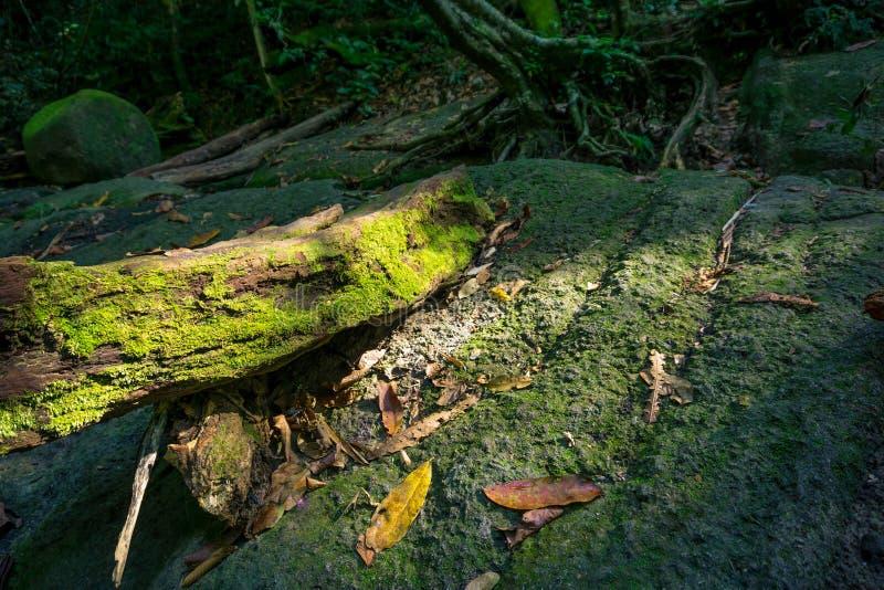 Старая тухлая ветвь, который сели на мель на утесе стоковые фото