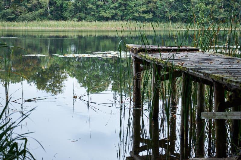 Старая тухлая пристань сделанная из древесины на озере предусматриванном в мхе с отсутствующими планками на озере в лесе стоковое фото rf