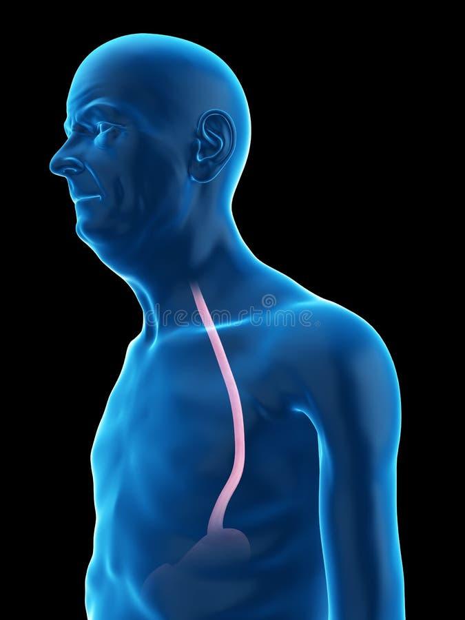 старая укомплектовывает личным составом esophagus бесплатная иллюстрация