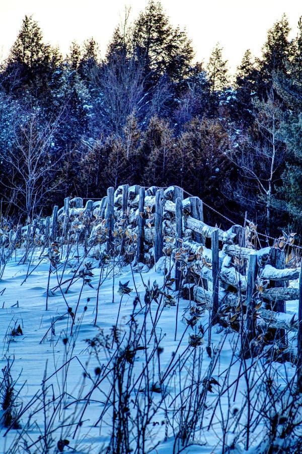 Старая ферма обнесет забором поле покрытое снегом в предыдущем свете стоковое фото rf