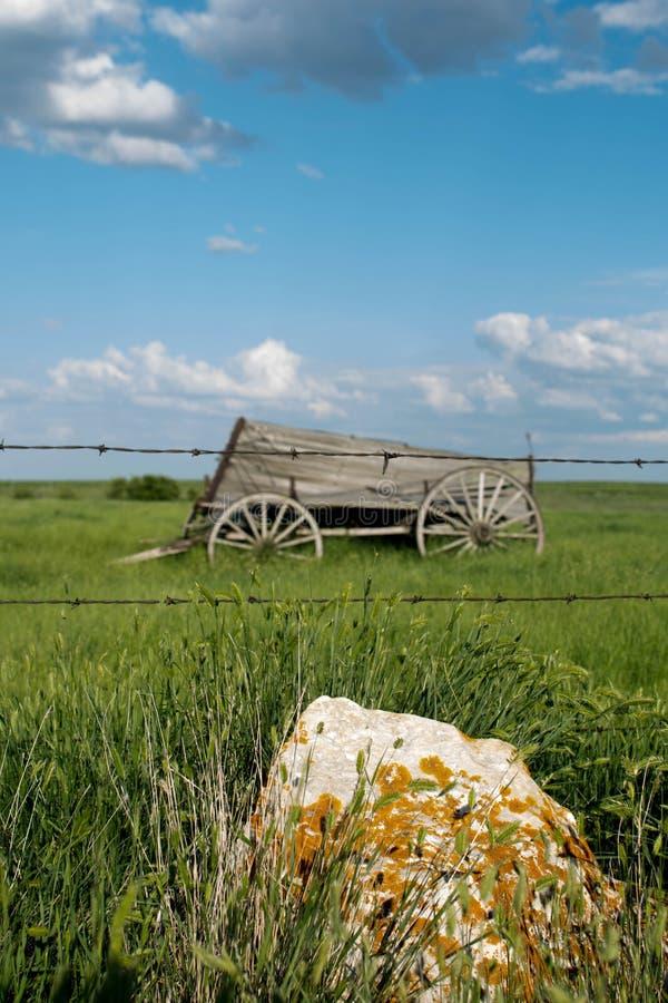 Старая фура лошади сидя в открытом поле стоковые фотографии rf