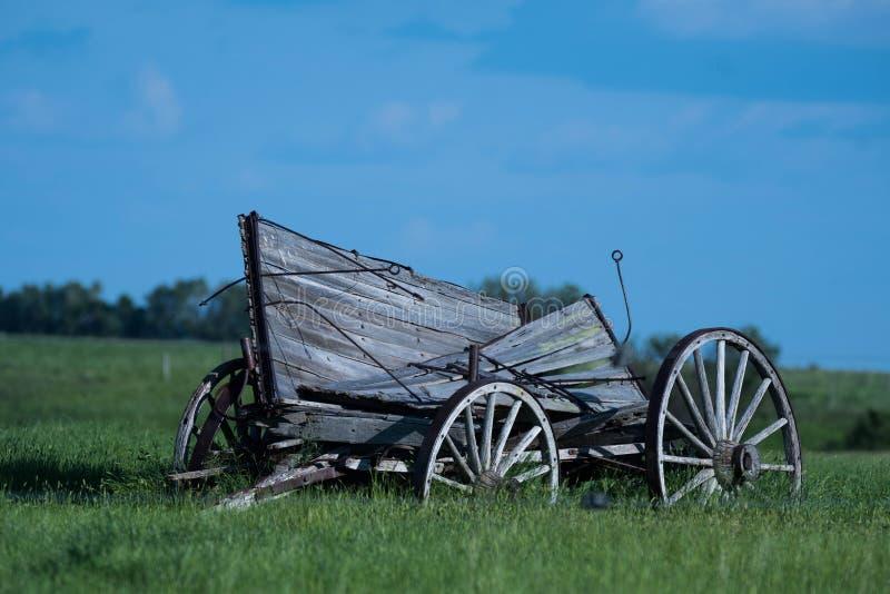 Старая фура лошади сидя в открытом поле стоковые изображения