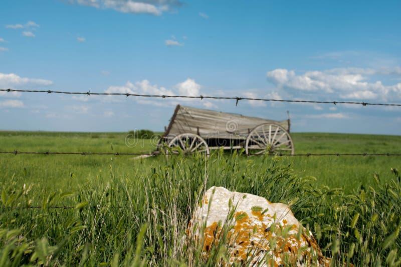 Старая фура лошади сидя в открытом поле стоковое изображение rf