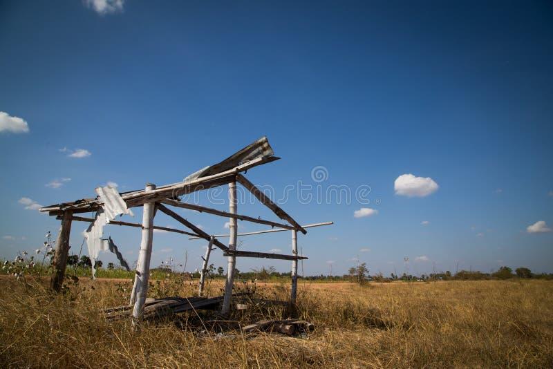 Старая хата на поле риса на голубом небе стоковая фотография