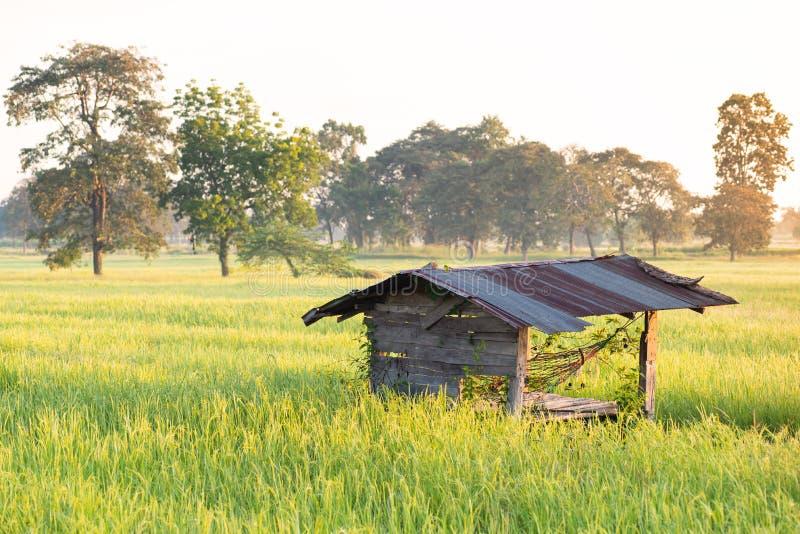 Старая хижина в зеленом поле риса с солнечным светом стоковая фотография