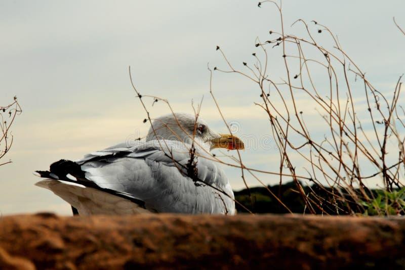 Старая чайка на крыше стоковое фото rf