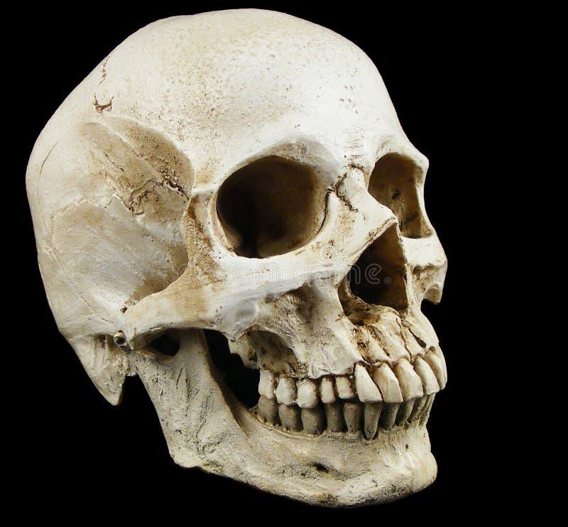 Старая человеческая реплика черепа стоковые изображения rf