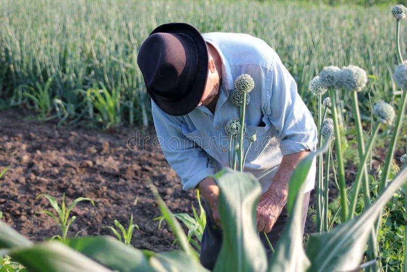 Старик в саде стоковое фото