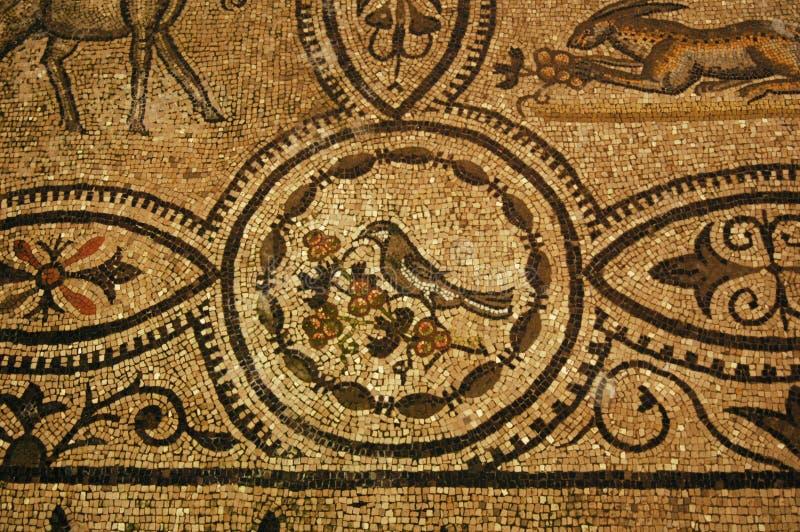 стародедовская птица ягод есть римский вал стоковая фотография rf