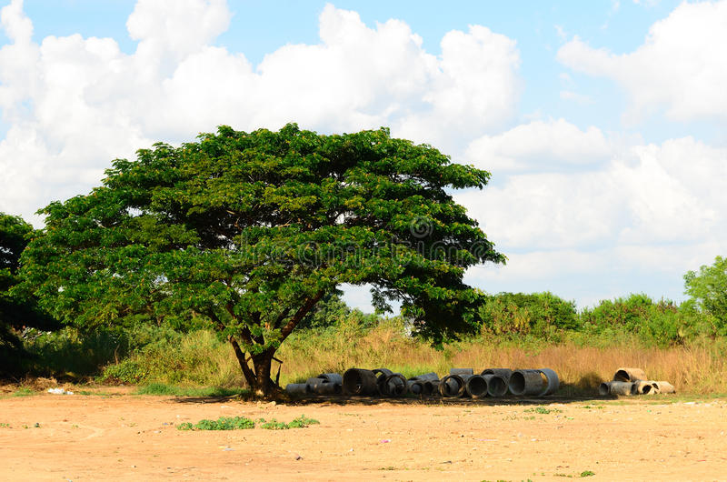 Download Старое большое дерево под голубым небом, Таиландом Стоковое Фото - изображение насчитывающей развилки, backhoe: 41662802