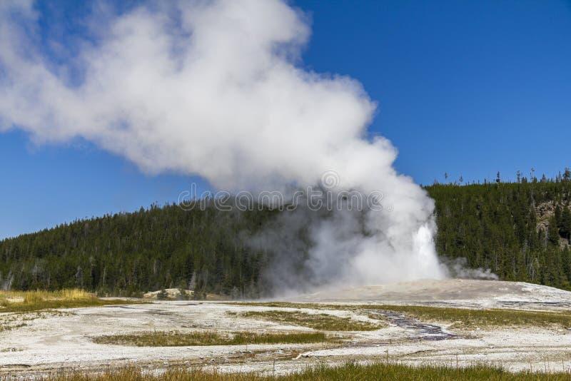 Старое верное извержение geysir в Йеллоустоне стоковая фотография