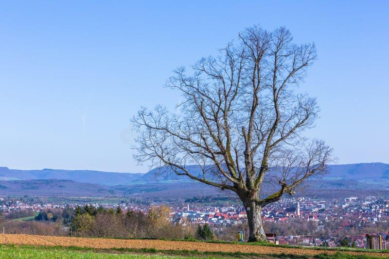 Старое дерево и взгляд к Nuertingen стоковое фото