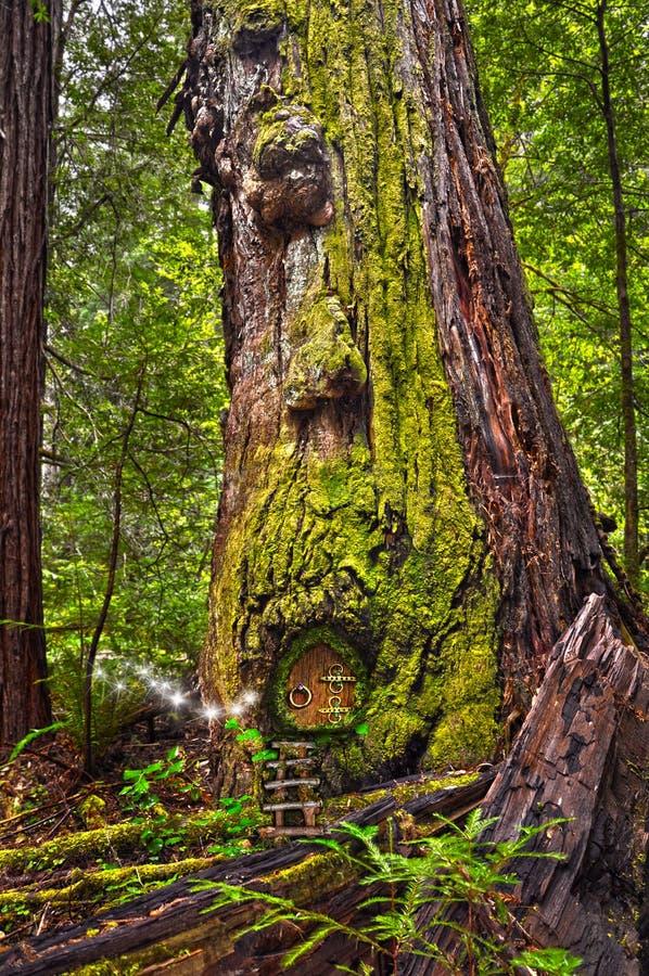 Старое дерево Redwood в лесе с дверью феи и светом феи сверкнает стоковая фотография rf