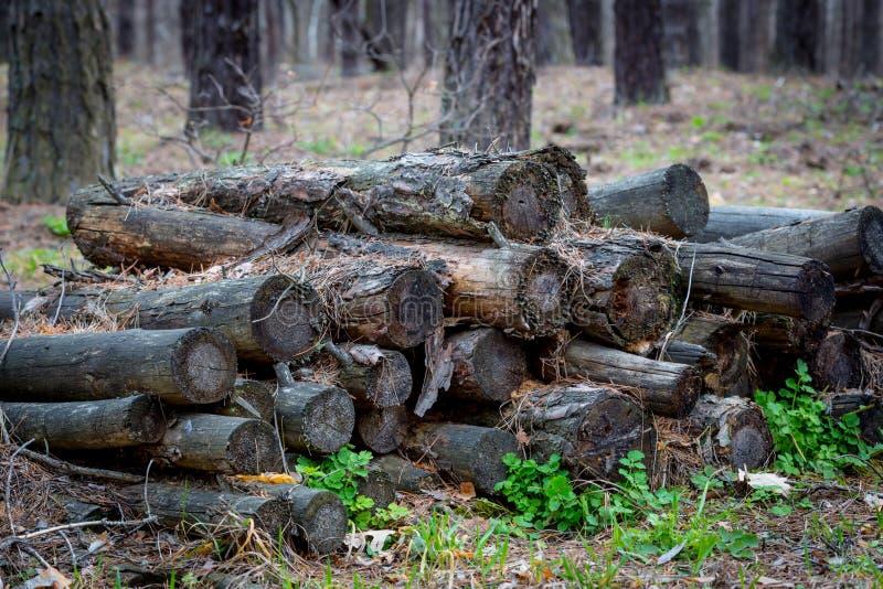 Старое деревянное вносит дальше лес в журнал стоковые изображения rf