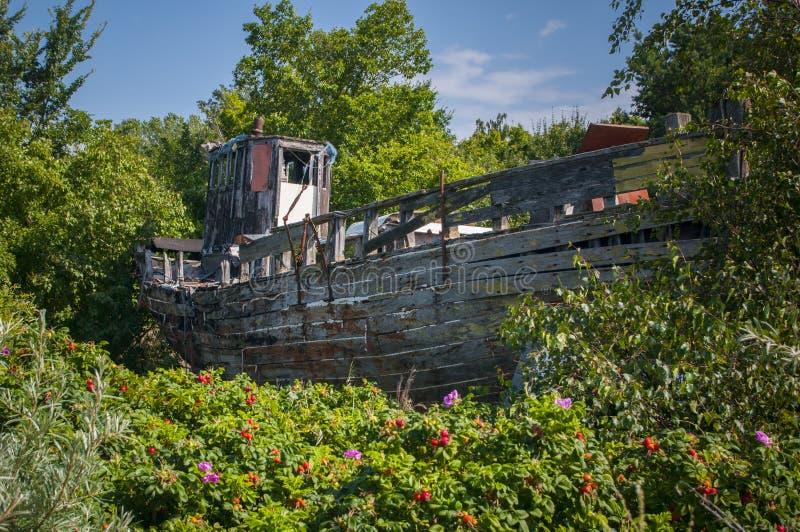 Старое деревянное boatWLA-55 на береге между вегетацией стоковая фотография rf