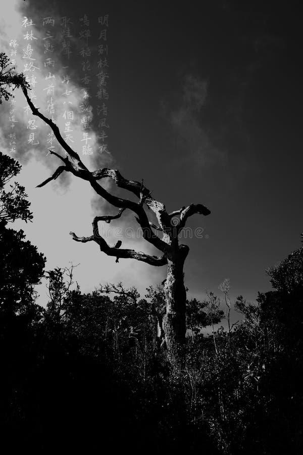 Старое дерево, ветер и китайское стихотворение стоковое изображение rf