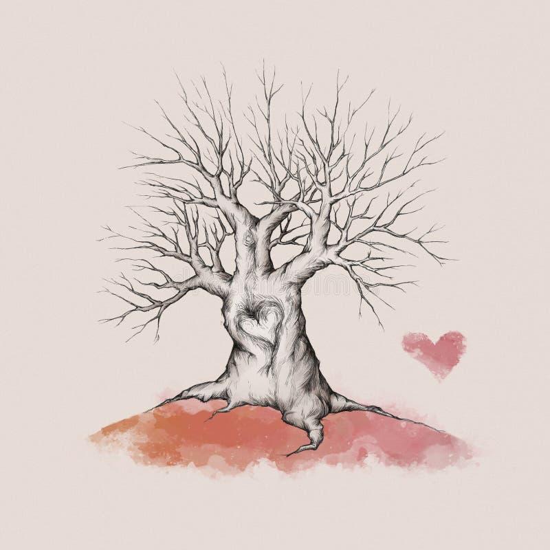 Старое дерево с сердцем стоковое изображение rf
