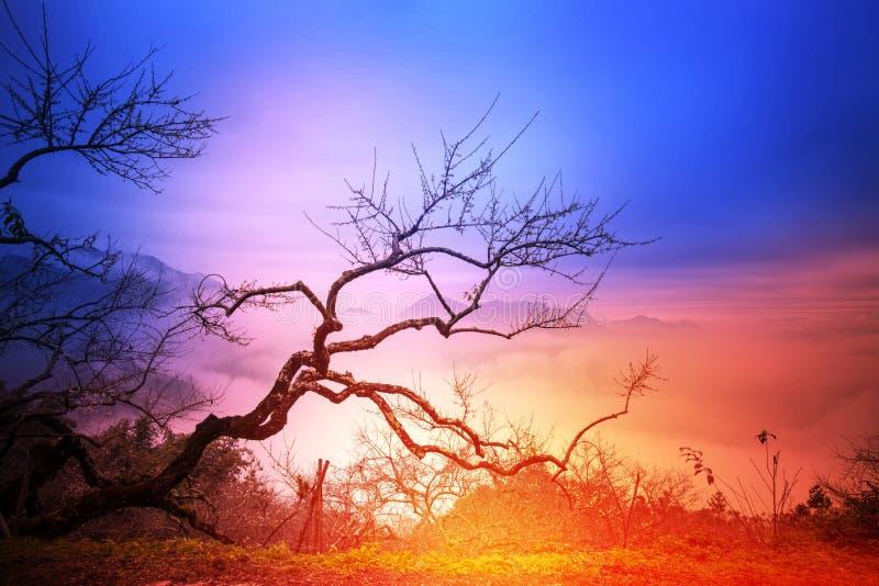 Старое дерево с славной предпосылкой стоковые фото