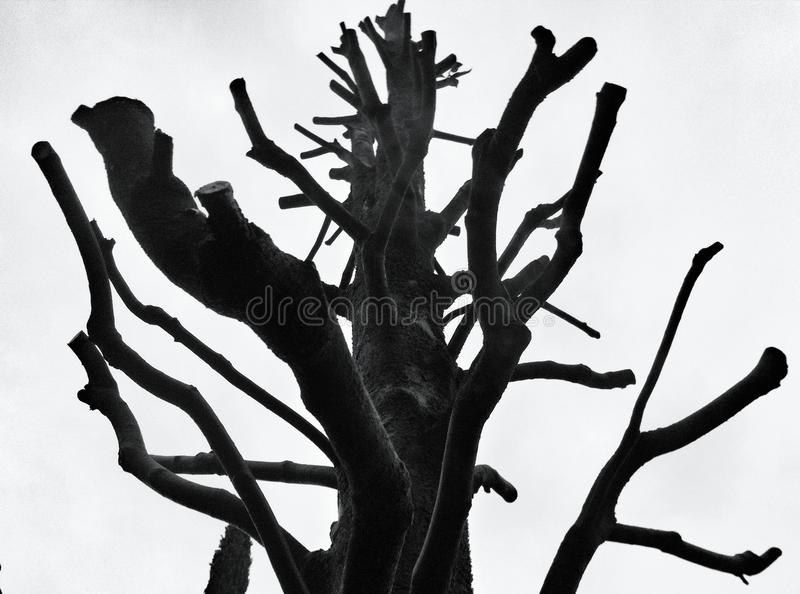 Старое дерево с чуть-чуть ветвями стоковое изображение