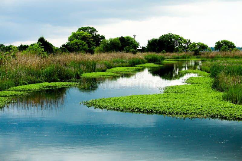 Старое затопленное поле риса стоковые изображения rf