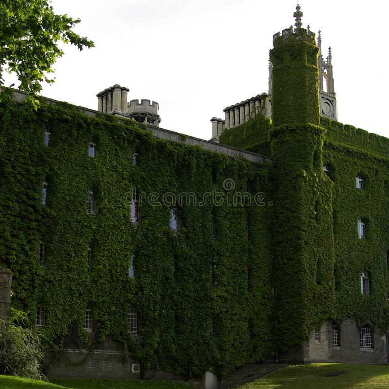 Старое здание в Англии, который выросли вверх с зелеными листьями стоковые фото