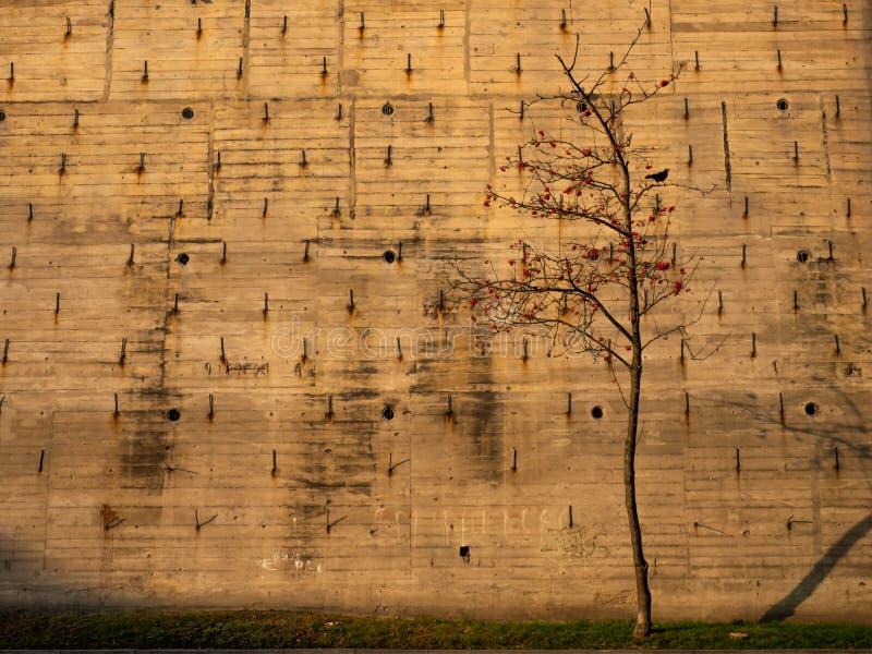 Старое здание с металлическими стержнями и сиротливым деревом стоковые фотографии rf
