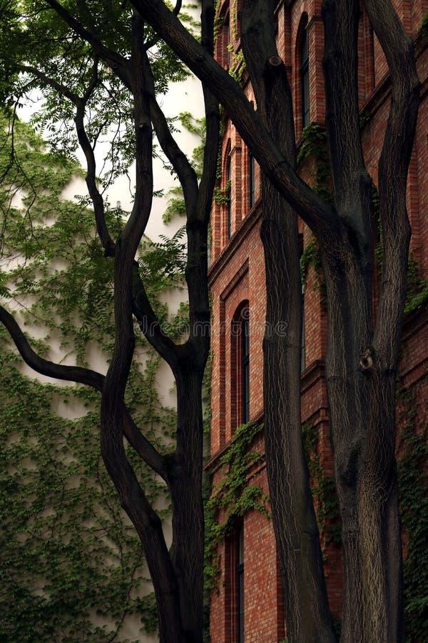 Старое здание с фасадом кирпича с деревьями стоковые фотографии rf