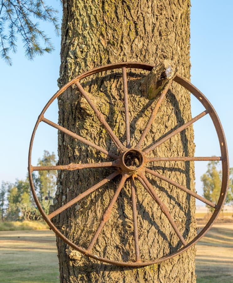 Старое и заржаветое колесо телеги металла висит в дереве стоковые изображения