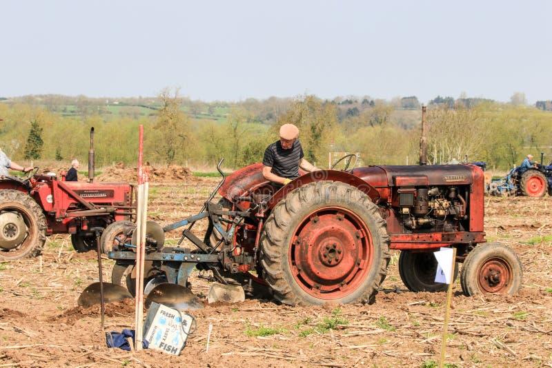 Старое красное massey fergusen трактор на паша спичке стоковая фотография