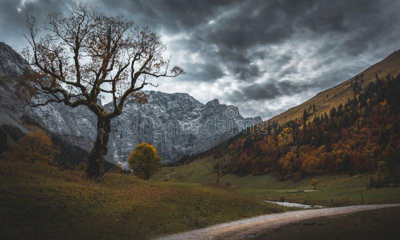 Старое мистическое дерево в горах стоковая фотография