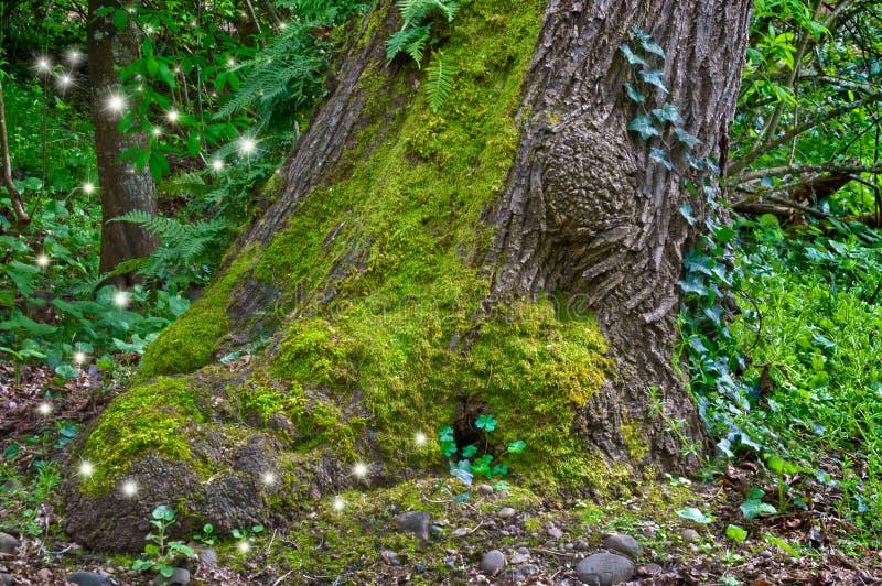 Старое мшистое дерево в лесе с fairy светом сверкнает стоковое фото
