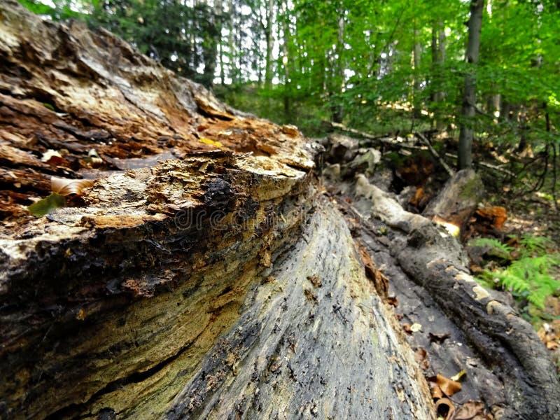 Старое напряжение в лесе стоковые изображения rf